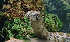 ilm_harry_potter_snake