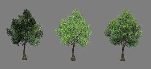 tree_normal_640x295